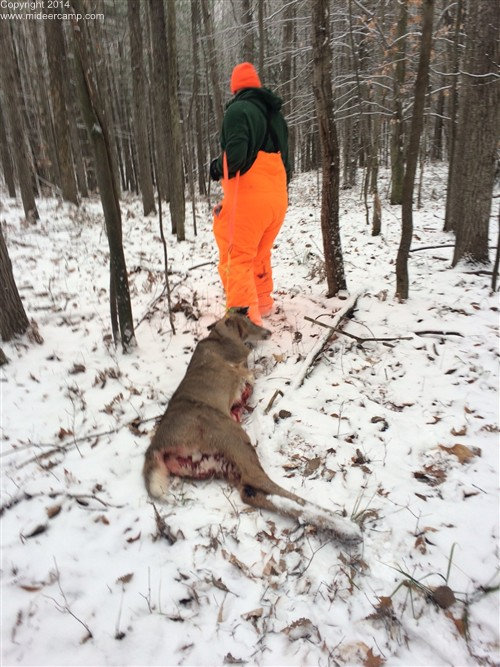 Steve Dragging a buck out of the woods